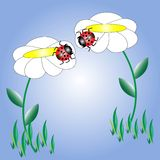 ladybugs Imagen de archivo