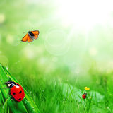 Ladybugs and butterfly. Sunny green field with ladybugs and butterfly Royalty Free Stock Image
