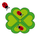 Ladybugs and cloverleaf on white background. Vector illustration Stock Image