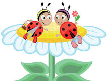 Ladybugs, CMYK. Two funny ladybugs ,with flowers Stock Photography