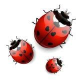 Ladybugs di vettore Fotografia Stock