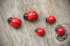 Ladybugs family Stock Photos