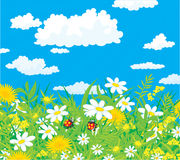 Ladybugs in a field. Vector illustration of a couple of ladybird in the grass in a field with flowers, against a blue sky with white clouds Royalty Free Stock Photo