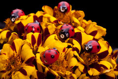 Ladybugs on the flower. Royalty Free Stock Photography