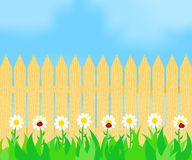 Grass and flowers before the fence. Ladybugs on flowers in front of a wooden fence Royalty Free Stock Images