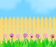 Grass and flowers before the fence. Ladybugs on flowers in front of a wooden fence Stock Images