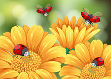 Ladybugs flying in the garden Royalty Free Stock Images