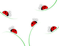 Ladybugs on Grass Illustration Stock Photo