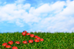 Ladybugs on green field Royalty Free Stock Images