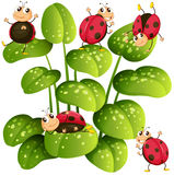 Ladybugs on green leaves Stock Image