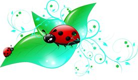 Ladybugs on green leaves Royalty Free Stock Photos