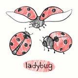 Ladybugs. Hand drawn  illustration. Royalty Free Stock Photos