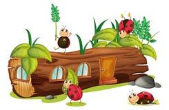 Ladybugs and a house Stock Photo