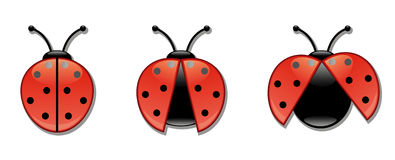 Ladybugs icon set. Ladibugs with open and closed wings Royalty Free Stock Photography