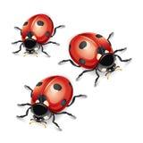 Ladybugs  illustration. Royalty Free Stock Photography