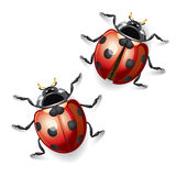 Ladybugs  illustration. Royalty Free Stock Photos