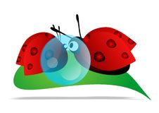 Ladybugs in love Royalty Free Stock Photography