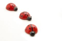 Ladybugs isolati su bianco Fotografie Stock Libere da Diritti