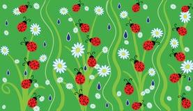 Ladybugs. Ladybug on green grass and flowers Stock Images