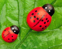 Ladybugs on the leaf Royalty Free Stock Photos