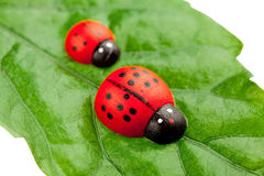 Ladybugs on the leaf Royalty Free Stock Images