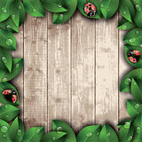 Ladybugs and leaves on wooden texture background. Stock Image