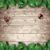 Ladybugs and leaves on wooden texture background. Stock Photo