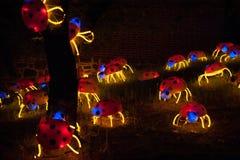 Ladybugs Lightscape Стоковые Фото