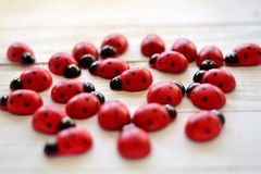 Ladybugs in love Stock Images