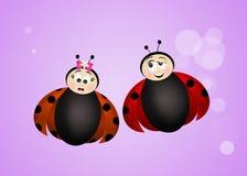 Ladybugs in love Stock Photo