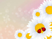 Ladybugs in love Stock Photography