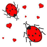 Ladybugs in love isolated Royalty Free Stock Images