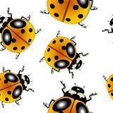Ladybugs pattern Stock Image