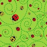 Ladybugs pattern Royalty Free Stock Images