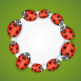 Ladybugs on round frame. Stock Photos