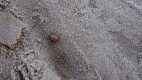 Ladybug on the grey textured sand royalty free stock image