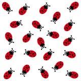 Ladybugs su priorità bassa bianca Fotografia Stock