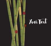 Ladybugs on Sugarcane Sticks Stock Photo