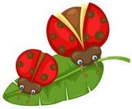 Ladybugs sul foglio Fotografia Stock Libera da Diritti