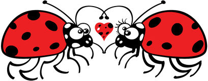 Ladybugs tenderly falling in love Stock Photography