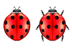 Ladybugs Royalty Free Stock Photos