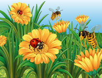 Ladybugs and wasps flying in garden Stock Photography