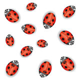 Ladybugs on white. Royalty Free Stock Image