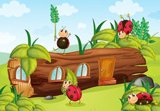 Ladybugs and a wood house Stock Image
