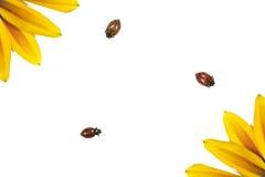 Ladybugs y flores Imagenes de archivo
