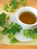 Ladys mantle tea Royalty Free Stock Photo