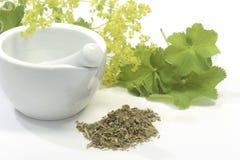 ladys salopy herbata Zdjęcia Stock