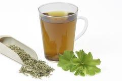 ladys salopy herbata zdjęcia royalty free