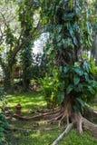 Lae подола понедельника, Uttaradit, Таиланд Стоковые Изображения