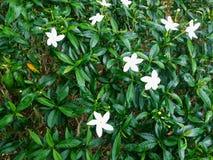 Laef de la flor blanca en el jardín imagen de archivo